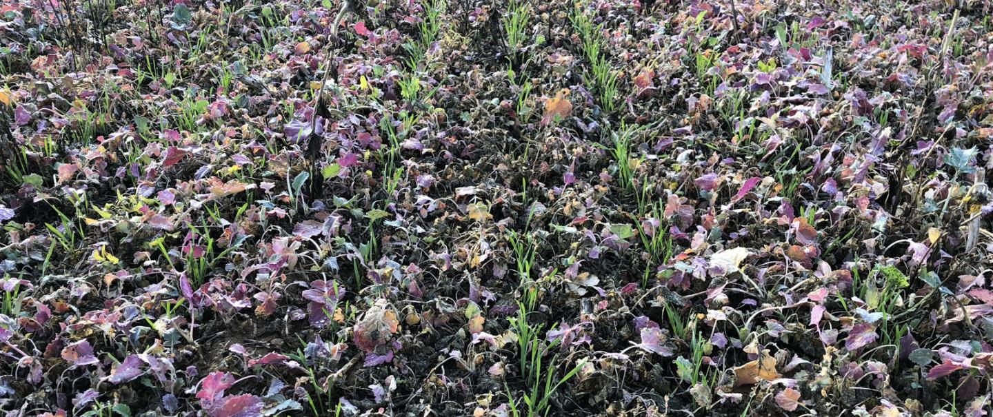 SH_AUROCK_Sowing_Different_Products_Cover_Crops.jpg